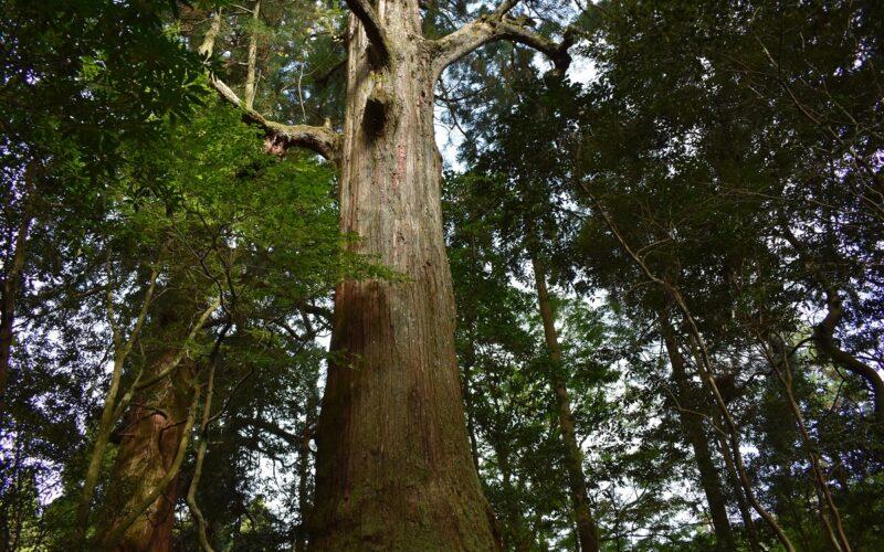 Gyoja-sugi Cedar Forest (Gyoja-do, Sakaime-ishi stone, Goma-dan, Water spring, Forest bath)
