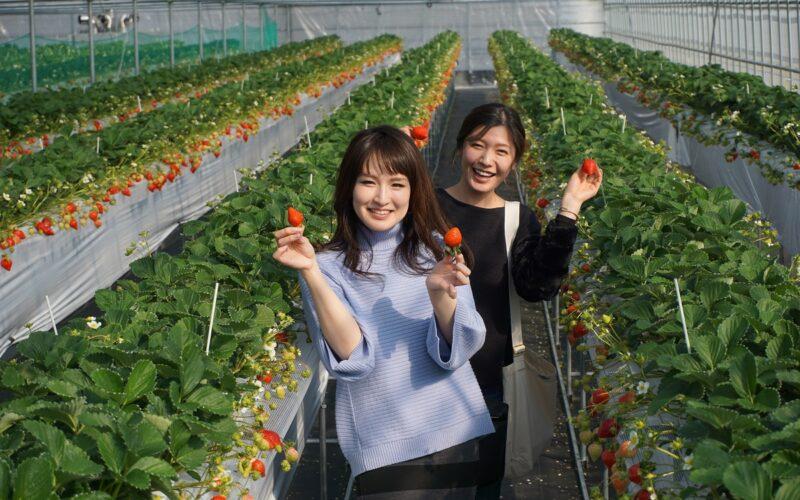 Lion Strawberry Farm