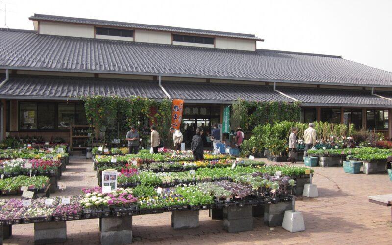 Sanren Suisha no Sato Asakura