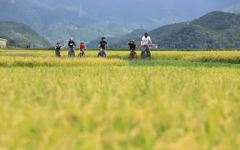 Wheat Fields (soybean fields)